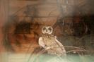 Oko w oko z ptakami_4