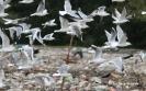 Europejskie Dni Ptaków w ZUOK-u_10