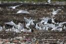 Europejskie Dni Ptaków w ZUOK-u_9