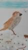 Ornitologiczny super uczeń_10