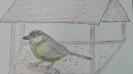 Ornitologiczny super uczeń_9