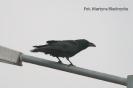 Późnojesienne obserwacje ptaków_1