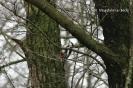 Późnojesienne obserwacje ptaków_5